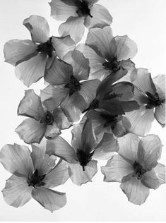 flower x-ray | black and white