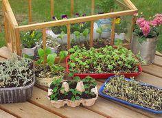 Reduce Reuse Recycle - Reduire Réutiliser Recycler : Avez-vous commencé vos semis de printemps ?  Voici quelques idées pour les réaliser avec des contenants recyclés. Tout est recyclable, question d'imagination... A votre créativité ♥