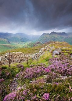 Let's put the Lake District on our list, Ash. Rain on the heather. The Langdale Pikes, Lake District, England Cumbria, Derbyshire, Beautiful World, Beautiful Places, Heather Flower, All Nature, English Countryside, Lake District, Belle Photo