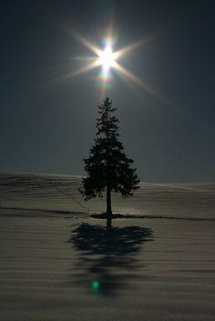 Lone Tree by Noel Field