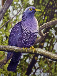 Pombo- African olive pigeon or Rameron pigeon Kinds Of Birds, All Birds, Love Birds, Exotic Birds, Colorful Birds, Pretty Birds, Beautiful Birds, Dove Pigeon, Big Bird