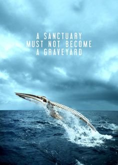 Save the whales, stop the Japanese whalers.