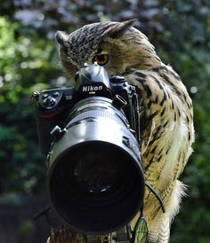*Move a little to your left? Perfect!  Eagle owl hijacks photo shoot and gets behind the camera.
