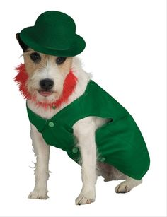 Leprechaun Pet Costume - You don't need to wait till St. Paddy's day to have your favorite pet feel the luck of the Irish. This fabulous 4 piece costume will turn Fido into a complete leprechaun.   The jacket is lined with shiny satin and has matching bow tie. The outfit also comes with detachable red beard and of course the green hat. Your pet will be looking for the pot at the end of the rainbow, well maybe it's the food bowl!  #stpatrick #yyc #costume #pets
