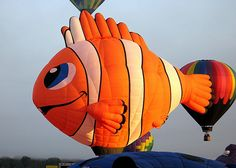 For the record, this clownfishs name is Wally.#Repin By:Pinterest++ for iPad#