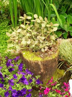 Petunias Planted Around Stump. More Information. More Information. Turn An  Old Tree Stump Into A Planter :)