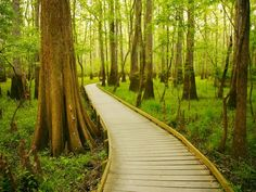 South Carolina's Congaree National Park is an ideal destination for nature- and adventure-lovers alike. Home to one of the tallest deciduous forest canopies on earth, the park offers first-rate bird watching and wilderness tours, plus kayaking, canoeing, and camping. The masses of Spanish moss make for gorgeous photo ops as well.