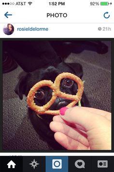 http://instagram.com/p/mWLk4mp7SB/ Follow this little cutie on Instagram! So cute!!!!! ❤️✨it!!!