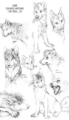 Wolf Drawings | Wolf Sketches by TamberElla on deviantART