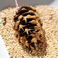pinecone birdfeeder