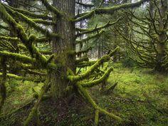 Skeleton Trees