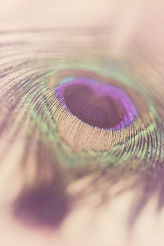 A macro, close up photo of a colorful and exotic peacock feather. Deep jewel tones and soft texture in this lovely photography wall art. This photograph is printed on wonderful, archival, Kodak Endura