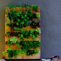 A fantastic DIY vertical garden using a palette and a durable plastic/cloth backing. Fill it up with soil while sitting horizontal first, plant your plants, let them begin to root, and prop it up!