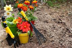 Autumn+garden | Autumn garden prep Gardening Preparation: Get Your Yard Ready for ...