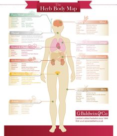 The Herb Body Map Infographic.  Wonderful infograph about herbs for different body ailments.