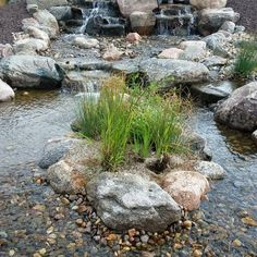 We did a little maintenace today on this waterfall and stream that we built this spring. We added the waterfalls onto an existing pond along with a wetland filter that has been keeping the pond clear with very little maintenace. #maintenancemonday #omahapondsNeptune's Water Gardens is the premier water feature design and installation company in the #Omaha Metro area. Our naturally balanced low-maintenance ecosystem ponds work with Mother Nature not against her. We pride ourselves in creating…