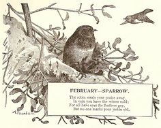 -CatnipStudioCollage-: Free Vintage Clip Art - Bird of the Month February Sparrow