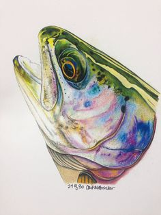MINI Colored Pencil Rainbow Trout Print limited by Passionfortrout