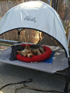 Game Mode, Dog Tent, Dog Gadgets, Dog Spaces, Pet Travel, Dog Accessories, Dog Care, Beautiful Dogs, Cute Dogs