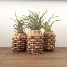 エアプランツ ホルダー pineapple M