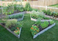 Raised Vegetable Garden Beds Can Be A Great Gardening Option – Handy Garden Wizard Vege Garden Design, Veg Garden, Raised Garden Beds, Raised Beds, Growing Flowers, Garden Projects, Garden Ideas, Dream Garden, Garden Planning