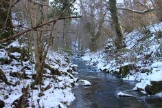 River, Snow, Outdoor, Nature, Wildlife, Cold, Shadow, Woods