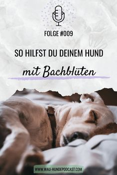#009 - Bachblüten für Hunde | miDoggy Community Whippet, Animals And Pets, Dogs, Movies, Movie Posters, Fit, Happy Animals, Dog Nutrition, Dog Training School