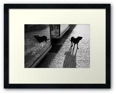 #photography #photo #art #print #artprint #streetphotography #streetphoto #bw #blackandwhite #street #frame #framedprint #findyourthing #photographs #artforsale #wallart #prague #czechia #city #urban #citylife #czechrepublic #dogs #dog #doggie #pets #animals #double #reflection
