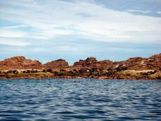 The Sea Lion colony at Los Islotes is said to be the biggest in the world. Near La Paz, Baja California Sur, Mexico.  http://bajabybus.com/blog/item/24-espiritu-santo-la-paz