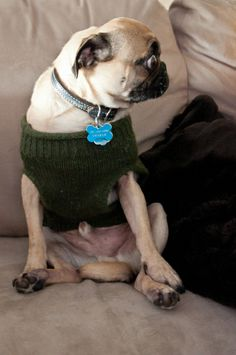 you can see my what? Pug Photos, Pug Love, Dogs Of The World, Funny Dogs, Pugs, Dog Breeds, Cute Animals, Lol, Doggies