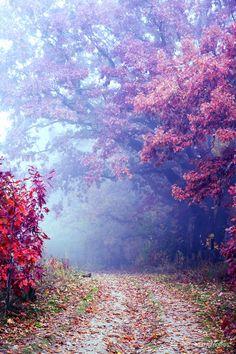 Autumn in Hamilton