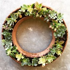 Succulent wreath, ceramic, handmade