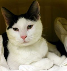 OUT OF TIME!!  NAME: Clark  ANIMAL ID: 24470694 BREED: DSH  SEX: Male  EST. AGE: 6 mos  Est Weight: 5.15 lbs Health:  Temperament: friendly-  ADDITIONAL INFO:  RESCUE PULL FEE: $39