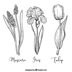 Pack of three hand-drawn flowers Free Vector