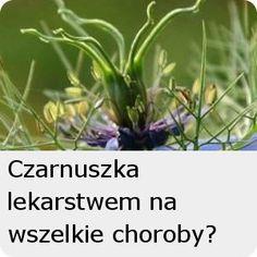 Nie dokarmiaj raka! | zdrowepasje.pl Nigella, Remedies, Herbs, Plants, Radiation Therapy, Fibromyalgia, Home Remedies, Herb, Planters