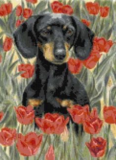Dachshund in tulips cross stitch | Yiotas XStitch
