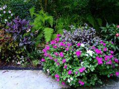 Edge of patio and tiered container, includes perilla magilla, persian shield, impatiens, ferns, wandering jew.