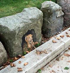 by David Zinn at EMU campus, MI, 10/15 (LP) More