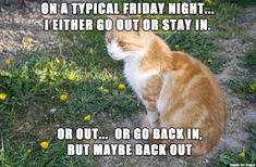Okcupid Cat