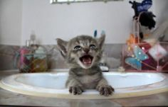 I'll never stop loving cats who are yelling