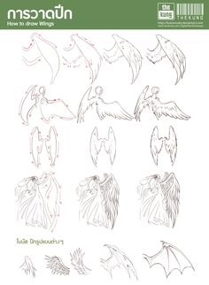 [How to draw Wing] by [fusionnuke]
