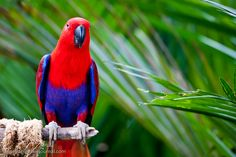 120 aves inusuales y de colores vibrantes @alvarodabril | Dineroclub Magazine sobre Marketing
