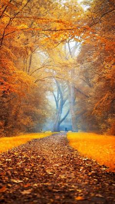 Thomas Kuipers mother nature moments The post Thomas Kuipers mother nature moments autumn scenery appeared first on Trendy. Beautiful World, Beautiful Places, Beautiful Pictures, Autumn Scenes, All Nature, Autumn Nature, Autumn Forest, Autumn Rain, Fall Pictures