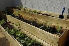 Fare l'orto sul balcone, non sprecando acqua