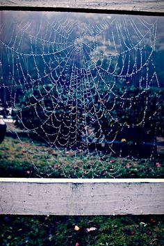 Spider Web with the fence...