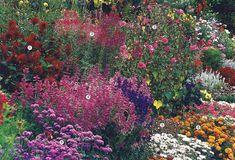 Клумба непрерывного цветения с мая по октябрь1 – георгина, 2 – клеома, 3 – мальва, 4 – шалфей, 5 – нолана, 6 – агератум, 7 – иберис, 8 – бархатцы.