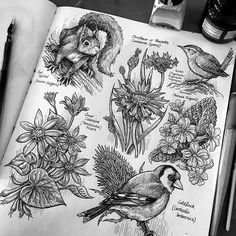 A series of pen and ink illustration from my sketchbook. Bird Drawings, Ink Pen Drawings, Animal Drawings, Drawing Sketches, Sketching, Pen Art, Marker Art, Natural Form Art, Book Page Art