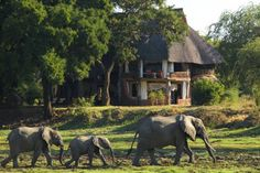 African Safaris for Families - Top 10 African Safari Lodges - Family Vacation Critic - Family Vacation Critic