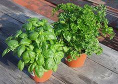 Warum Urban Gardening immer wichtiger wird from smoothiefy.com Abgesehen von der Lebenqualitätssteigerung und den Vorzügen von natürlichen und frischen Le Gardening, News, Plants, Garten, Lawn And Garden, Planters, Garden, Plant, Planting