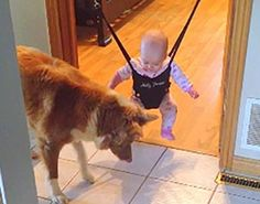 Alexis and Day, Dog Teaching Baby To Jump